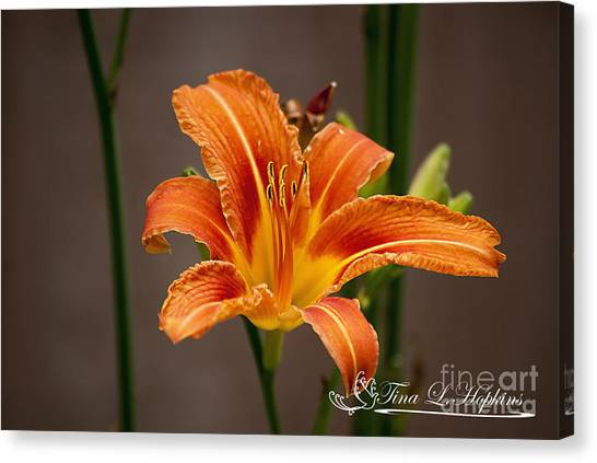 Orange Day Lily 20120620_27a Canvas Print
