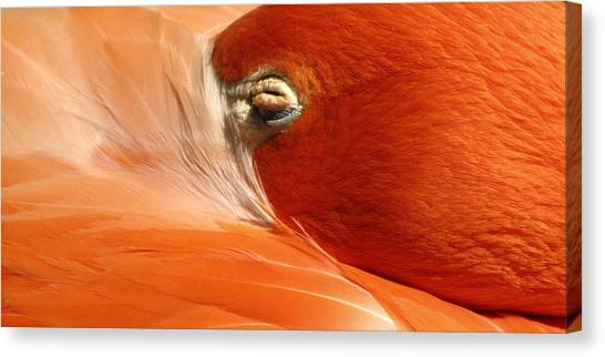 Flamingo Orange Eye Canvas Print
