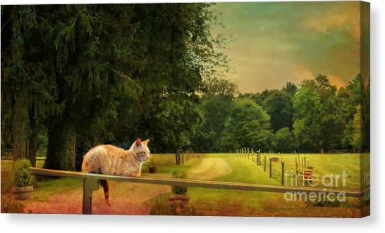 Orange Farm Cat Canvas Print