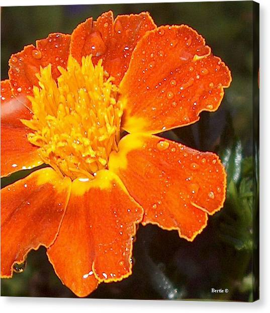 Orange Flower Canvas Print