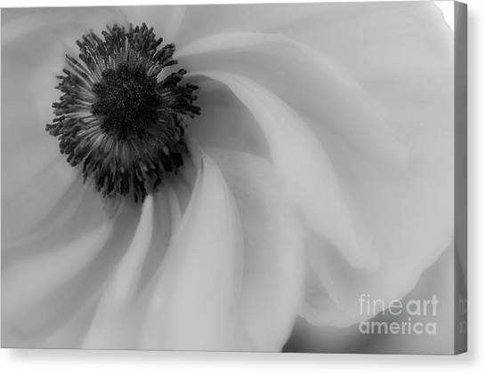 Orange Flower In Black And White Canvas Print