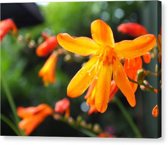 Orange Flowers Canvas Print by Jason Davies