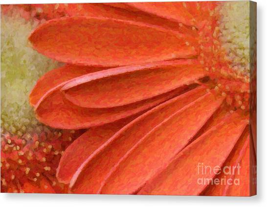 Orange Gerber Daisy Painting Canvas Print