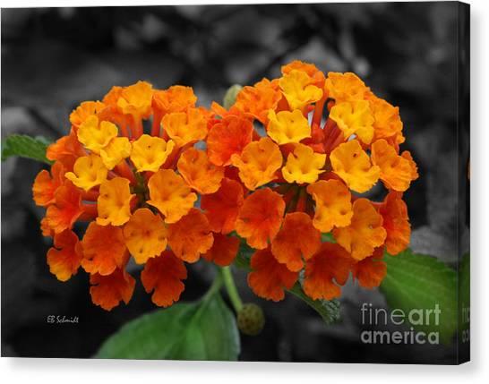 Orange Lantana Canvas Print