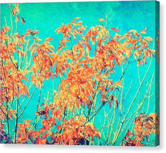 Orange Leaves And Turquoise Sky  Canvas Print