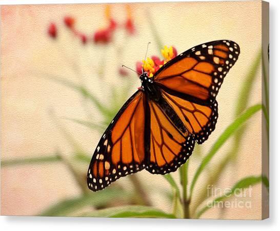 Tropical Stain Glass Canvas Print - Orange Mariposa by Sabrina L Ryan