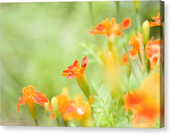 Orange Meadow Canvas Print