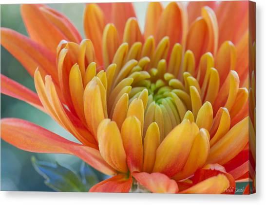 Orange Mum Closeup Canvas Print