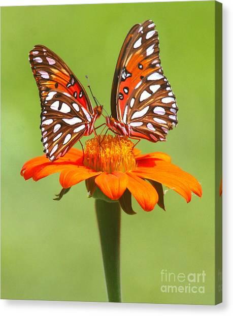 Orange On Orange Canvas Print