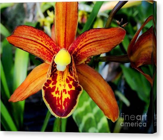 Orange Orchid Canvas Print