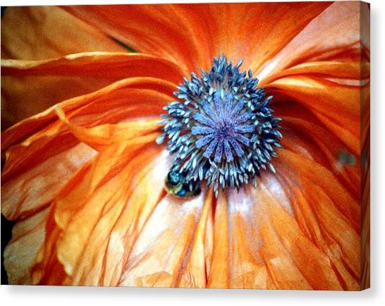 Orange Poppy Close-up Canvas Print