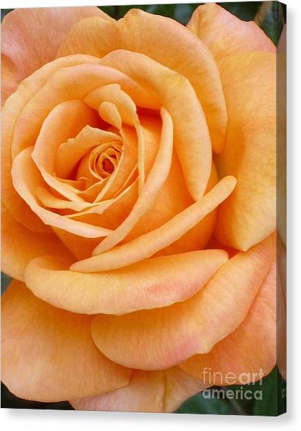 Orange Rose Blossom Special Canvas Print