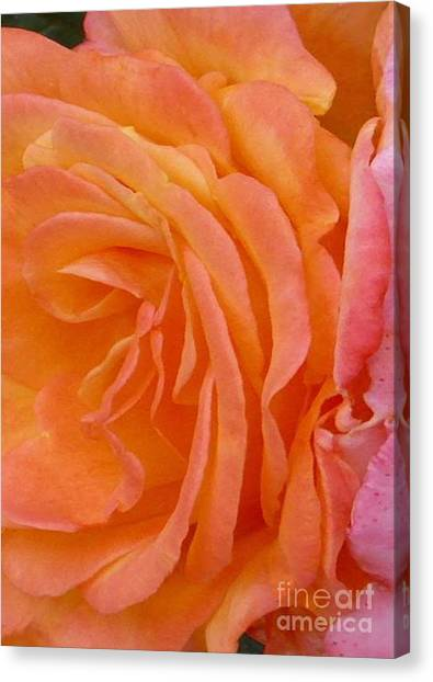 Orange Rose Swirl Canvas Print
