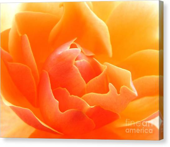Orange Sherbet Canvas Print
