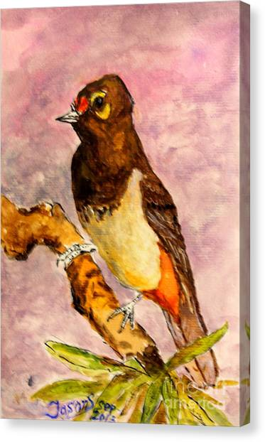 Orange-spotted Bulbul Canvas Print