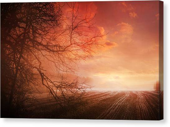 Orange Sunrise On Field Canvas Print by Dorothy Walker