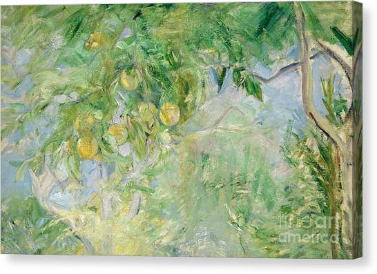 Orange Tree Canvas Print - Orange Tree Branches by Berthe Morisot