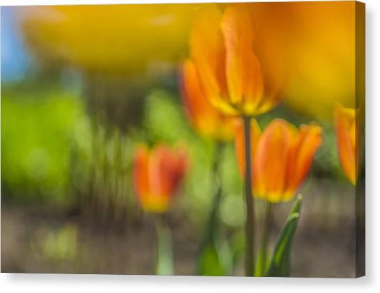Orange Tulip On Fire Canvas Print