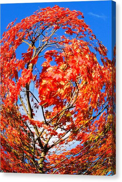 Orange Twirl -1 Canvas Print