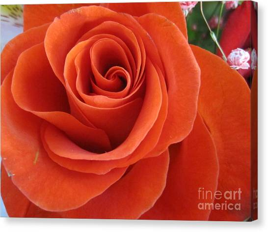 Orange Twist Rose 2 Canvas Print