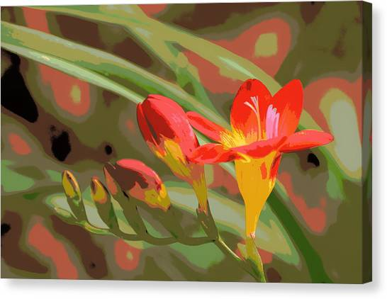 Orange Yellow Freesia 1 Canvas Print by Sheri McLeroy