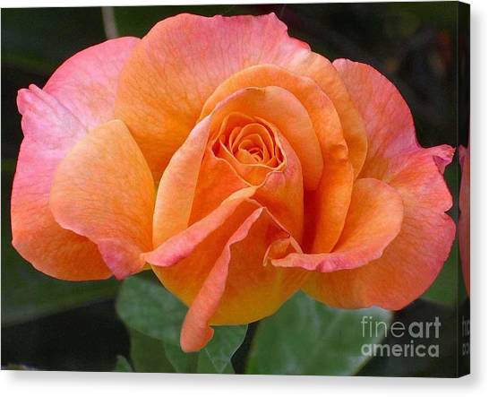 Orangerine Rose Canvas Print
