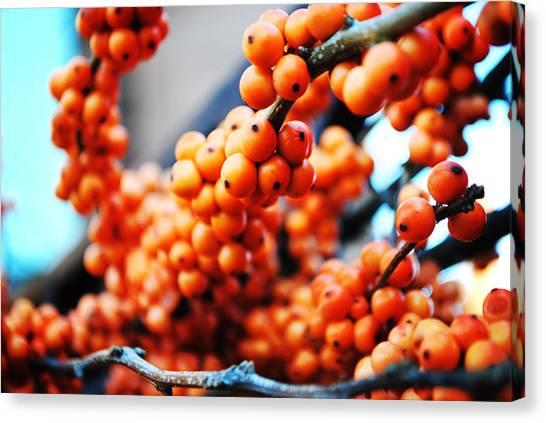 Oranges Canvas Print by Charlie Gaddy
