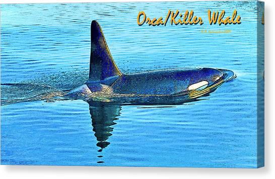 Orca Killer Whale Digital Art Canvas Print by A Gurmankin