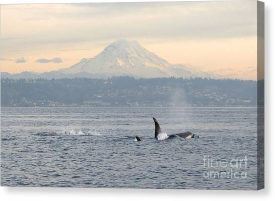 Orcas And Mt. Rainier Canvas Print