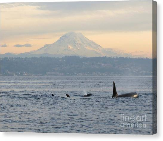 Orcas And Mt. Rainier II Canvas Print
