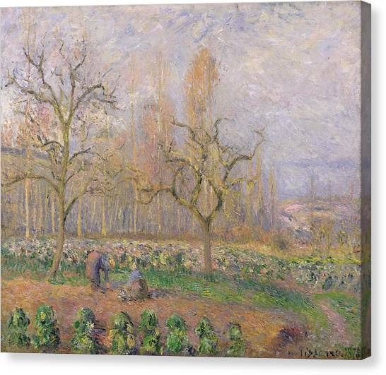 Vegetable Garden Canvas Print - Orchard At Pontoise by Camille Pissarro