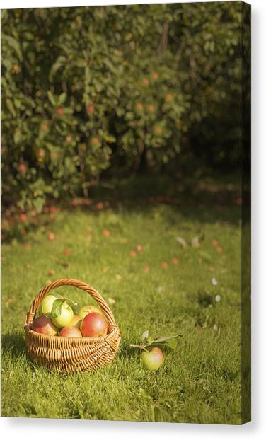 Fruit Baskets Canvas Print - Orchard by Amanda Elwell