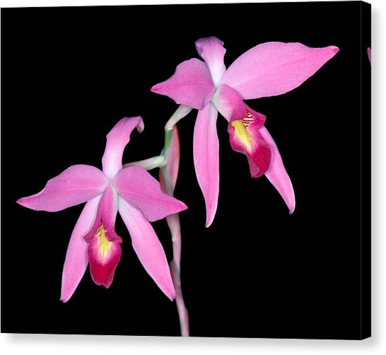 Orchid 1 Canvas Print
