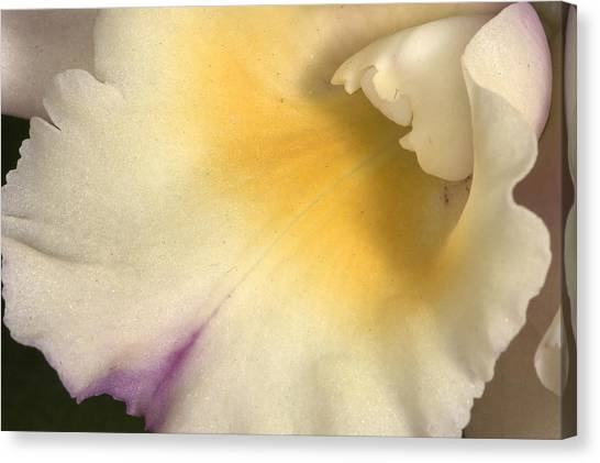Orchid 486 Canvas Print