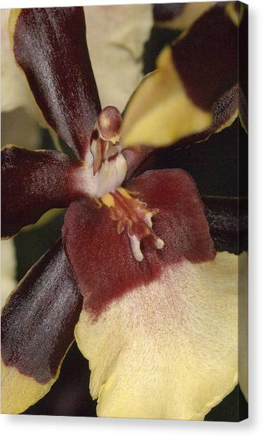 Orchid 496 Canvas Print