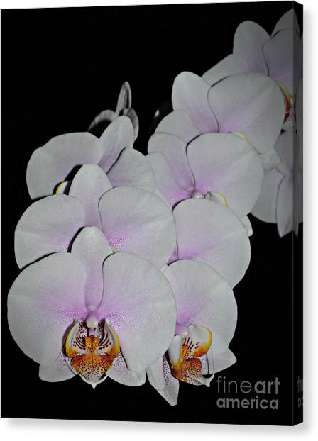 Orchid Bunch Canvas Print