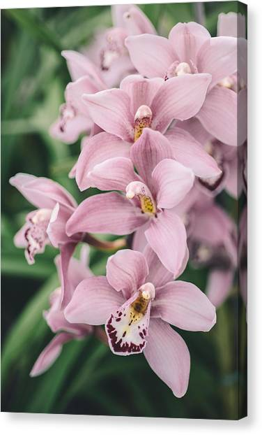 Orchid Cascade Canvas Print