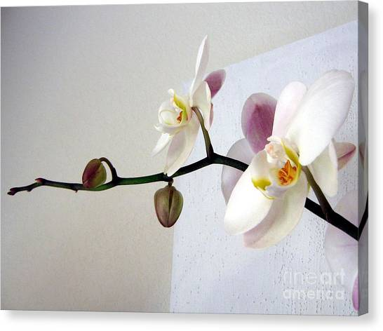 Orchid Coming Out Of Painting Canvas Print
