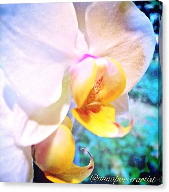 Orchids Canvas Print - White Christmas Orchid by Anna Porter