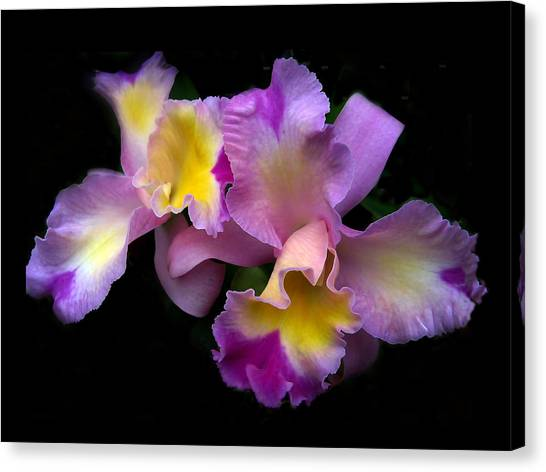 Orchid Embrace Canvas Print