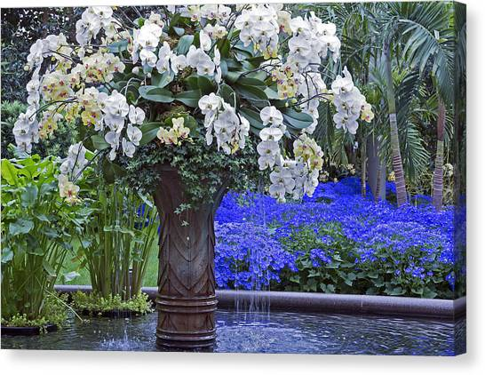 Orchid Fountain Canvas Print