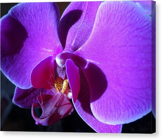 Orchid From My Valentine Canvas Print