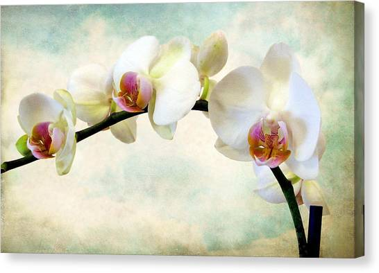 Orchid Heaven Canvas Print