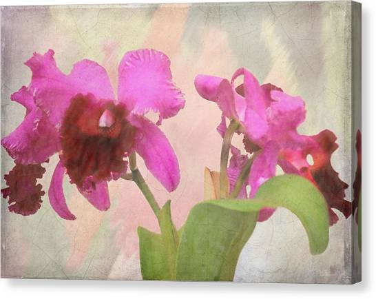 Orchid In Hot Pink Canvas Print