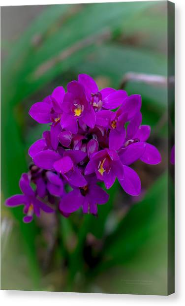 Orchid In Motion Canvas Print