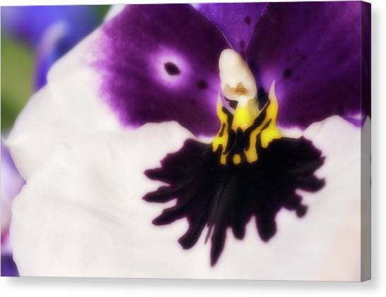 Orchid Labellum (miltoniopsis Sp.) Hybrid Canvas Print by Maria Mosolova/science Photo Library