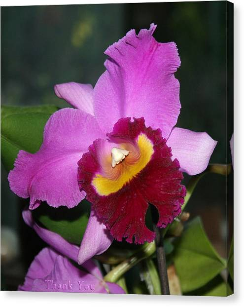 Orchids Canvas Print - Orchid Nose 2 And A Reminder To Utter The Words Thank You. by Raenell Ochampaugh