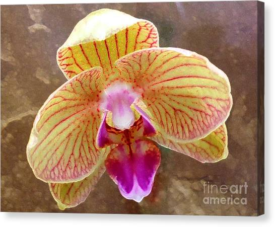 Orchid On Marble Canvas Print