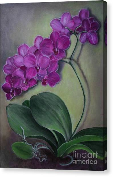 Phalenopsis Canvas Print - Orchid by Randy Burns