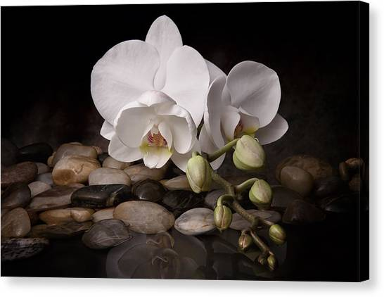 Orchid Canvas Print - Orchid - Sensuous Virtue by Tom Mc Nemar